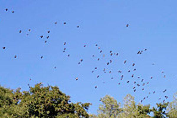 bird_morocco_11