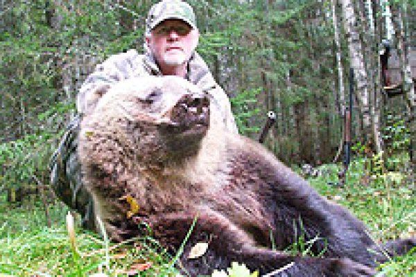 eurasian_brown_bear_03