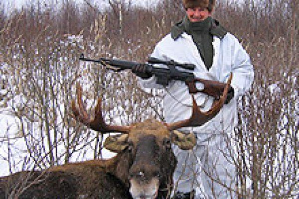 european_moose_12