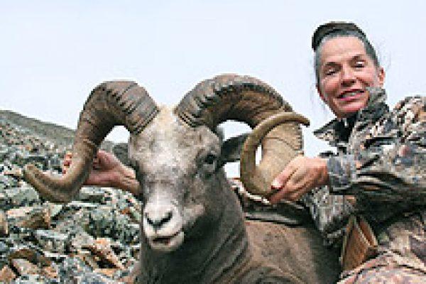 okhotsk_snow_sheep_01