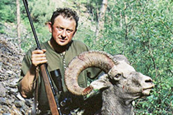 okhotsk_snow_sheep_14