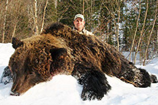 siberian_brown_bear_02