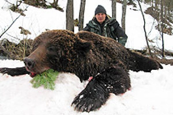 siberian_brown_bear_03