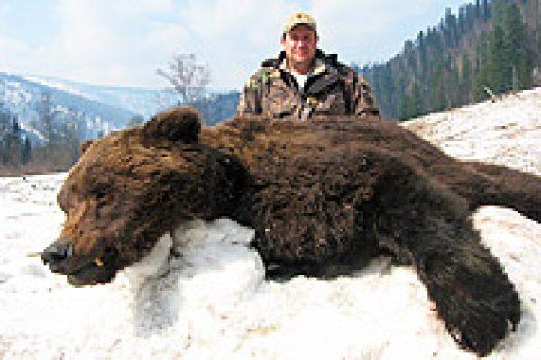 siberian_brown_bear_04