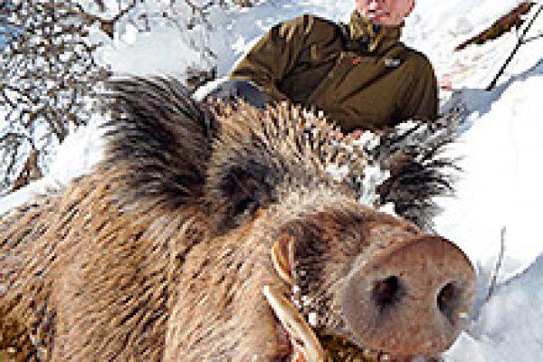 wild_boar_01