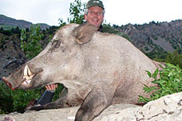 wild_boar_02