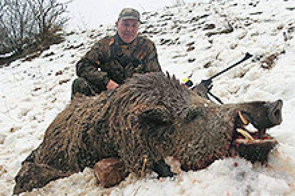 wild_boar_07